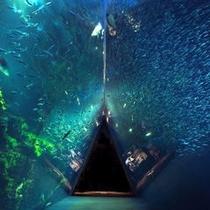 *環境水族館【アクアマリンふくしま】