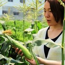収穫の喜びを味わってみませんか?