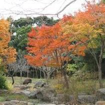 下田の紅葉3