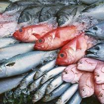 獲れたて天然地魚♪季節によって様々な魚介が水揚げされます♪
