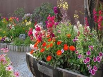 『花のおもてなし宣言』の宿