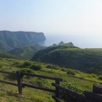 魔天崖という絶壁の手前の草原です!牛や馬が放し飼いにされてます。