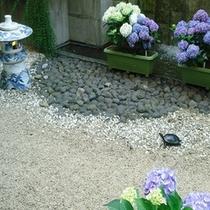 亀キチと紫陽花