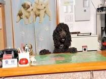 いらっしゃいませ。フロントでは看板犬のモナがお出迎えいたします。