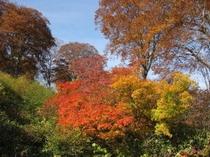 秋!野沢温泉の紅葉