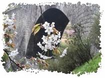 支配人のフォトアトリエNO:021 「桜咲く通潤橋」