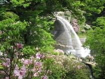 支配人のフォトアトリエ「新緑と放水」