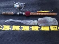 秋のはアオリ烏賊も釣れます