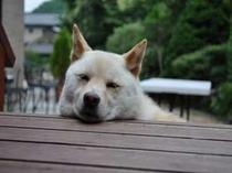 セイコウ荘看板犬:マルコ