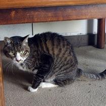 【看板猫】当館の看板猫も一緒にみなさまのお越しをお待ちしております♪