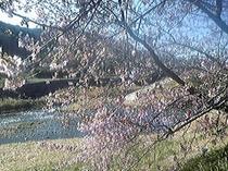 みなみの桜・川