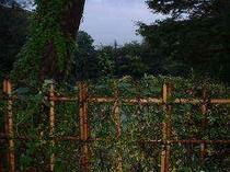 射水神社入り口右の森