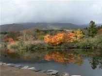 いもり池と紅葉