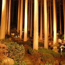 ライトアップされた百年杉庭園