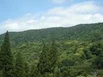 自然が広がるホテル周辺景観