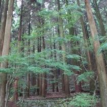 6月の百年杉庭園