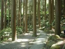 敷地内散策コースでの風景Ⅲ