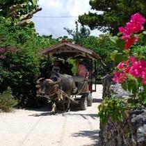 【竹富島観光付プラン】竹富島水牛車で集落内を観光