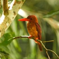 【フサキガーデン】新緑と鳥たちのさえずりで目覚める爽やかな朝
