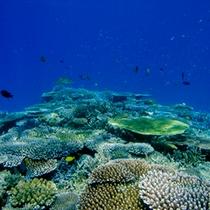 【シュノーケリングツアー】カラフルな熱帯魚が泳ぐポイントまで船でご案内