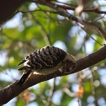 季節毎にさまざまな鳥達が、羽を休めにやってきます。