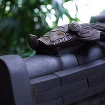 庭を注意して見渡すと・・・こっそり佇む亀の親子。ぜひ探してみてくださいね。
