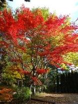 風の季の紅葉