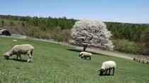 春のまきば公園