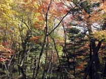 通仙峡の紅葉