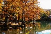 秋のドッコ沼