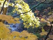 紅葉と二度川