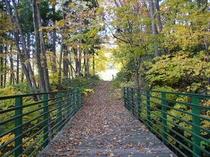 秋のヴァルトブリュッゲ