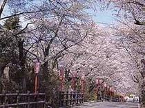 当館前の桜坂