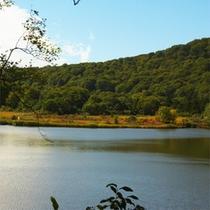 *緑の季節の大沼/沼をとりまくブナ林と湿原の花々が魅力です。当館より徒歩7分。