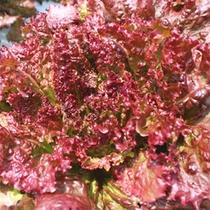 自社農園の採れたて新鮮野菜は、味も栄養もGood!