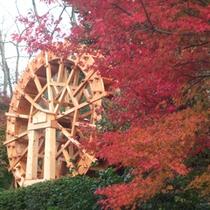 紅葉と水車