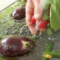 夏野菜 水流