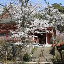 ■薬王院の桜