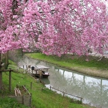 ■大聖寺の花見舟