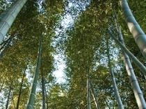 100年越しの竹林