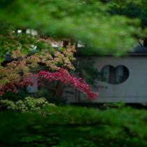 庭園 紅葉と茶室