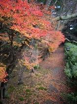 秋の庭園 松泉湖沿い