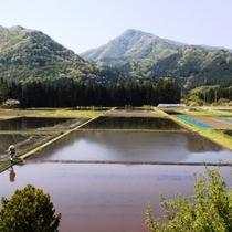 周辺_宿からの眺望_春