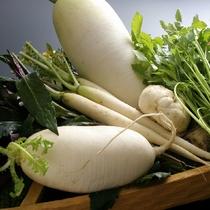 加賀野菜(イメージ)