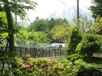 お庭からの富士山