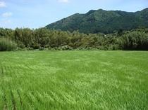 旅荘茶谷自家農場2