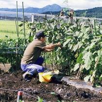 周辺の田園風景の中では、実際に農作業をされている方も。