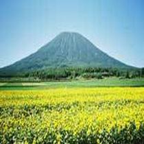 羊蹄山の景色2
