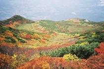 羊蹄山紅葉