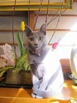 猫女将リリー